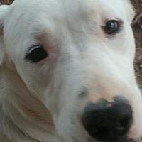 Adopt A Pet :: Arthwen - Lancaster, KY
