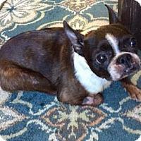 Adopt A Pet :: Zoey - Fairmont, WV