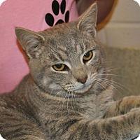 Adopt A Pet :: Simba - Windsor, VA