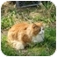 Photo 4 - Domestic Longhair Cat for adoption in Crescent City, California - Julius