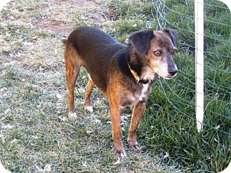 Beagle Mix Dog for adoption in Torrance, California - PILOT