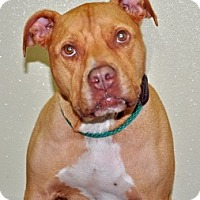 Adopt A Pet :: Taffy - Port Washington, NY