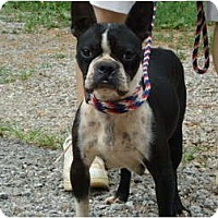 Adopt A Pet :: Hopie - Allentown, PA
