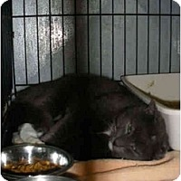 Adopt A Pet :: Big Mike - Mission, BC