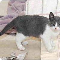 Adopt A Pet :: Darcie - Colmar, PA