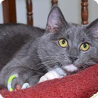 Adopt A Pet :: Sasha - Medina, OH
