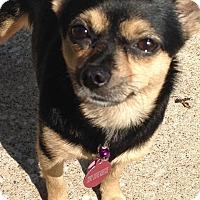 Adopt A Pet :: Rosie/pending - Elkhart, IN
