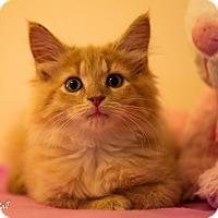 Adopt A Pet :: Chester - Stafford, VA