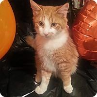 Adopt A Pet :: Artum - Harrisburg, NC