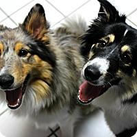 Adopt A Pet :: Nova & Neiko - Forked River, NJ