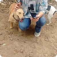 Adopt A Pet :: Louise - Somerville, TX
