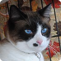 Adopt A Pet :: Kona & Kahlua - Palmdale, CA