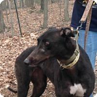 Adopt A Pet :: JT Mohican - Gerrardstown, WV