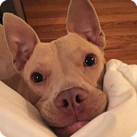 Adopt A Pet :: Robbie - Memphis, TN