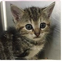 Adopt A Pet :: Khloe - Springdale, AR