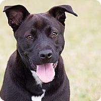 Adopt A Pet :: Annesley - Miami, FL
