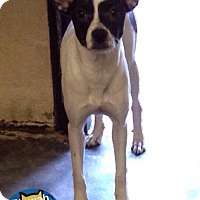 Adopt A Pet :: Urrie - Boston, MA