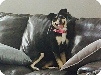 German Shepherd Dog Mix Dog for adoption in Princeton, Minnesota - Velvet