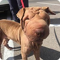 Adopt A Pet :: Mara - Colorado Springs, CO
