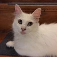 Adopt A Pet :: Leah - Delmont, PA