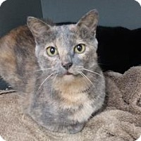 Adopt A Pet :: Chestnut - Paducah, KY