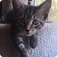 Adopt A Pet :: Yoko - Gainesville, FL