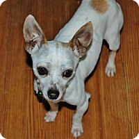 Adopt A Pet :: Jack Frost - Charlotte, NC