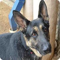 Adopt A Pet :: LOBO - Plano, TX