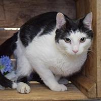 Adopt A Pet :: Oscar - Herndon, VA