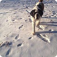 Adopt A Pet :: STILLWELL - Sudbury, MA