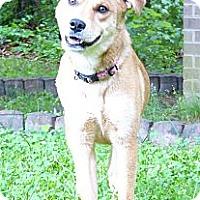 Adopt A Pet :: Dixie - Mocksville, NC