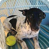 Adopt A Pet :: Jill - Jacksonville, FL
