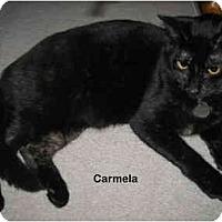 Adopt A Pet :: Carmela - Portland, OR