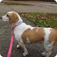 Adopt A Pet :: Pumpkin Pie - Painesville, OH