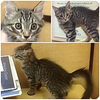 Adopt A Pet :: Belza - Modesto, CA