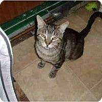 Adopt A Pet :: Jiggers - Hamburg, NY