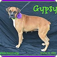Adopt A Pet :: Gypsy - Plano, TX