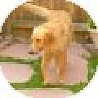 Adopt A Pet :: Beau - Denver, CO