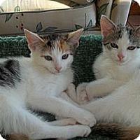 Adopt A Pet :: Maybelline & Anea - Acme, PA