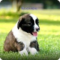 Adopt A Pet :: Boomer - Austin, TX
