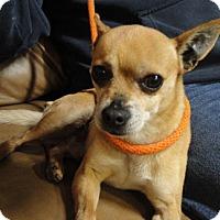 Adopt A Pet :: Jordy - Meridian, ID