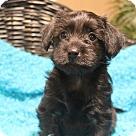 Adopt A Pet :: Rizzoli