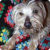 Adopt A Pet :: GiGo (Gee Joe) - Memphis, TN