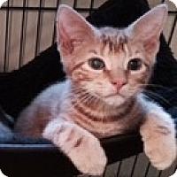 Adopt A Pet :: FINNICK - Hamilton, NJ