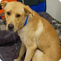 Adopt A Pet :: Mickey-pending adoption - Manchester, CT