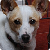 Adopt A Pet :: Nelson - Los Angeles, CA