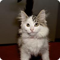 Adopt A Pet :: Lizzie - Medina, OH
