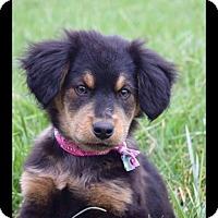 Adopt A Pet :: Landry - Albemarle, NC