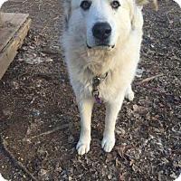 Adopt A Pet :: Riley  (Has application) - Washington, DC