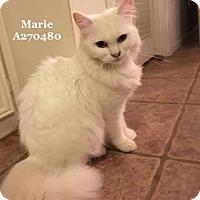 Adopt A Pet :: MARIE - Conroe, TX